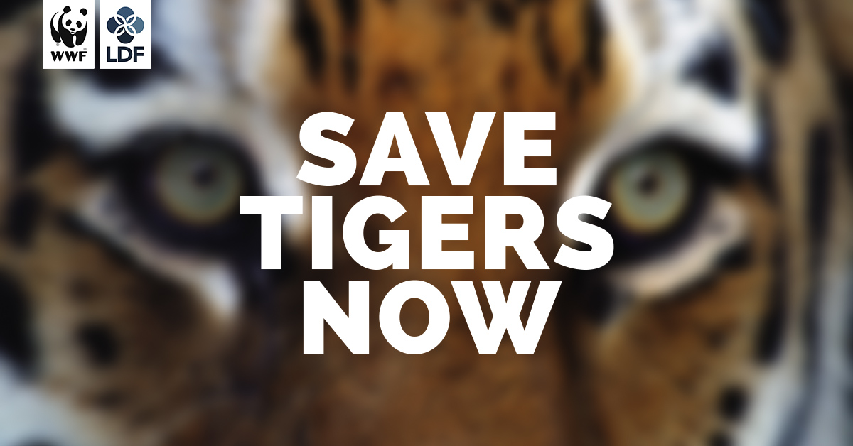 Save Tigers Now Wwffacebooksharejpg Business Plan Writers Needed also Online Research Writers  Learn English Essay Writing